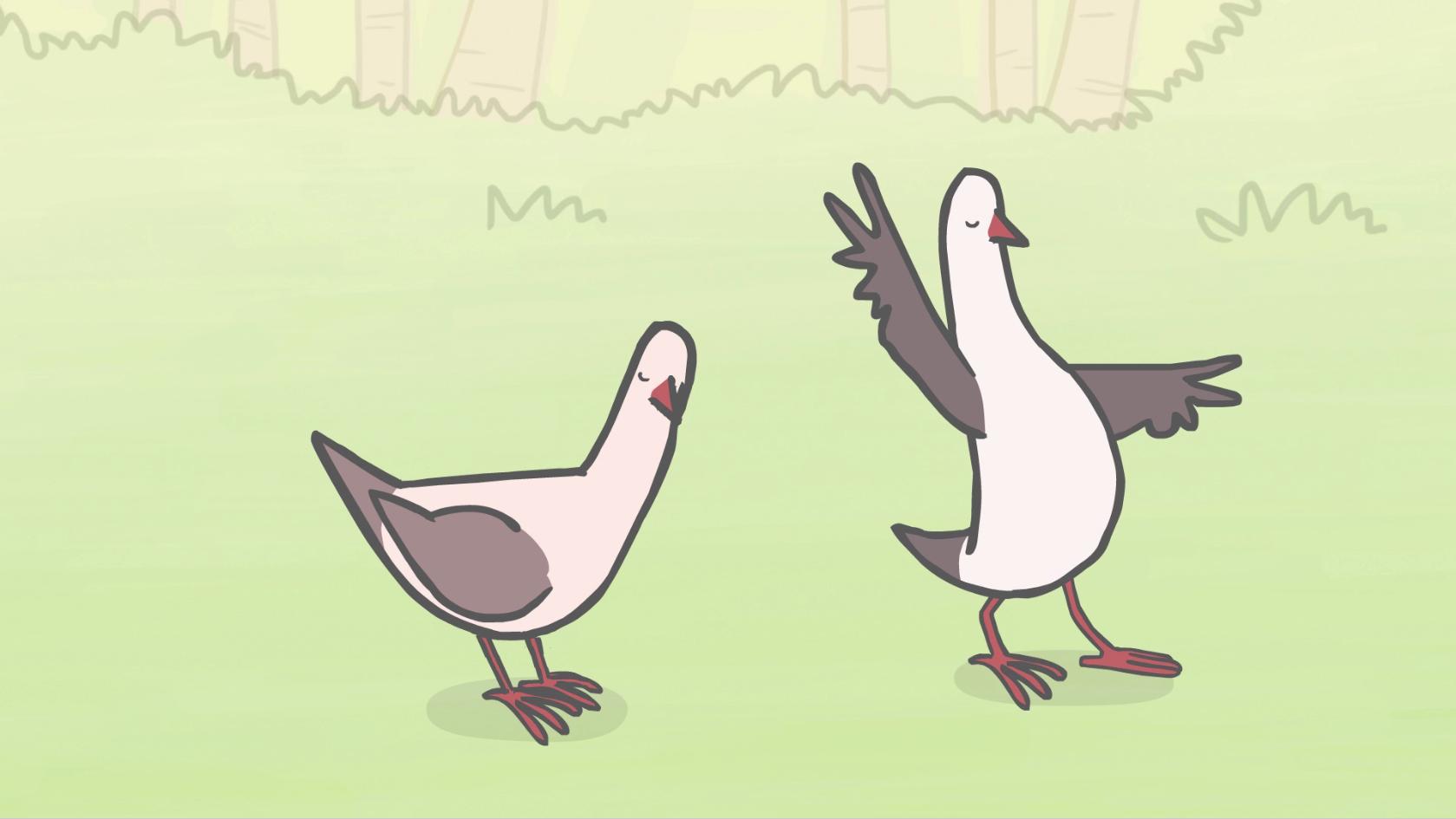 pink-pigeons_dancing